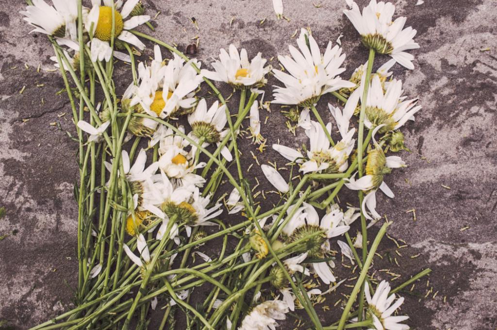 fleurs fanées mort