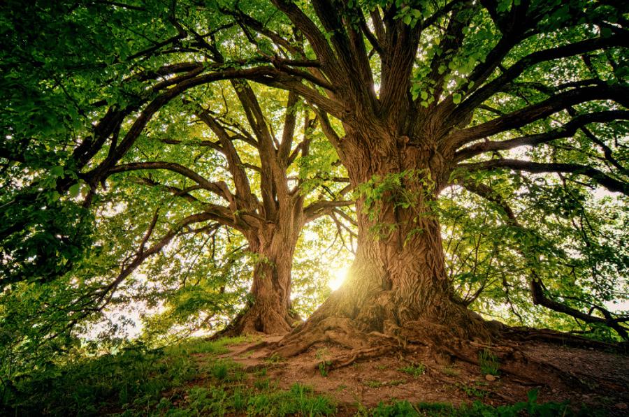 arbres confiance en soi
